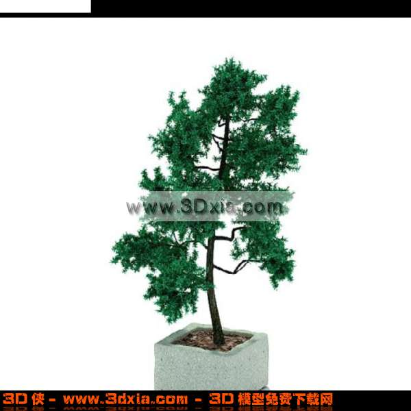 3d精美的小松树盆栽模型